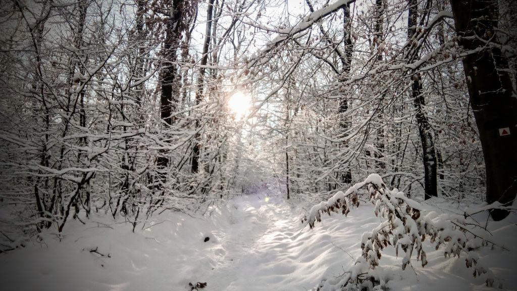 #035 Nyúlcipőbolt Budai trail | 2018.12.16.