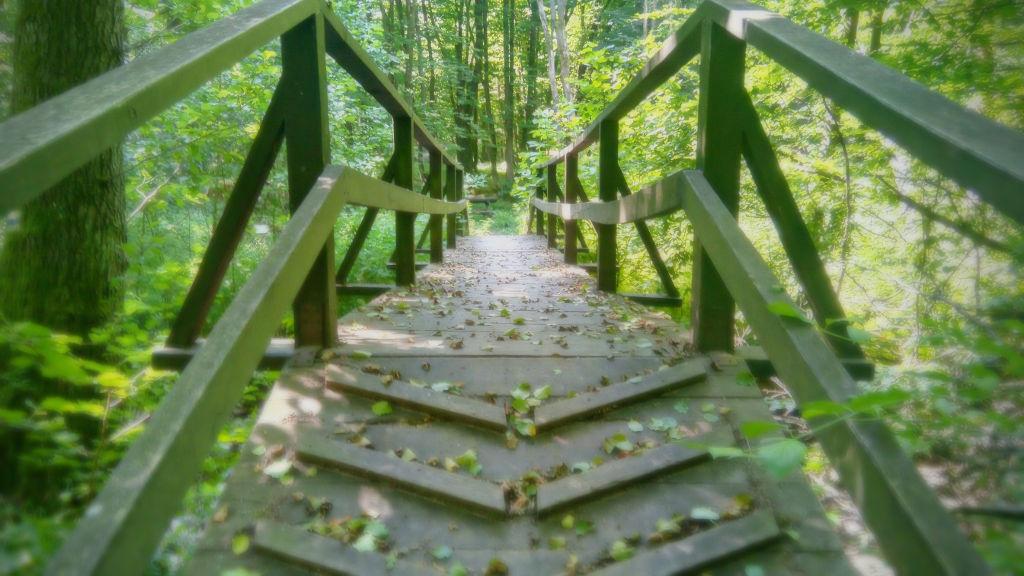 Híd a természetbe
