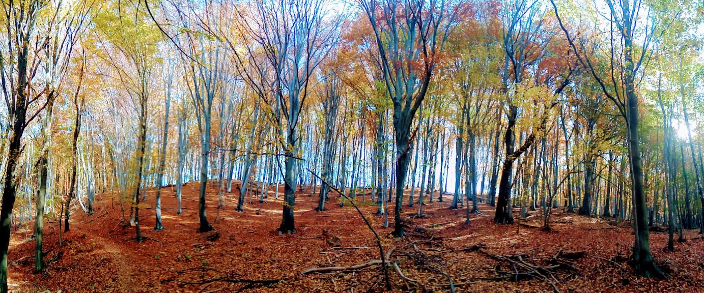 Panoráma Trail a zempléni erdőben