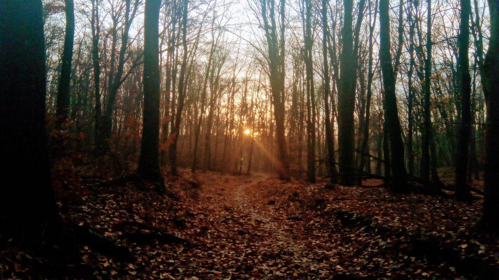 Napkelte a Fekete-hegyeken