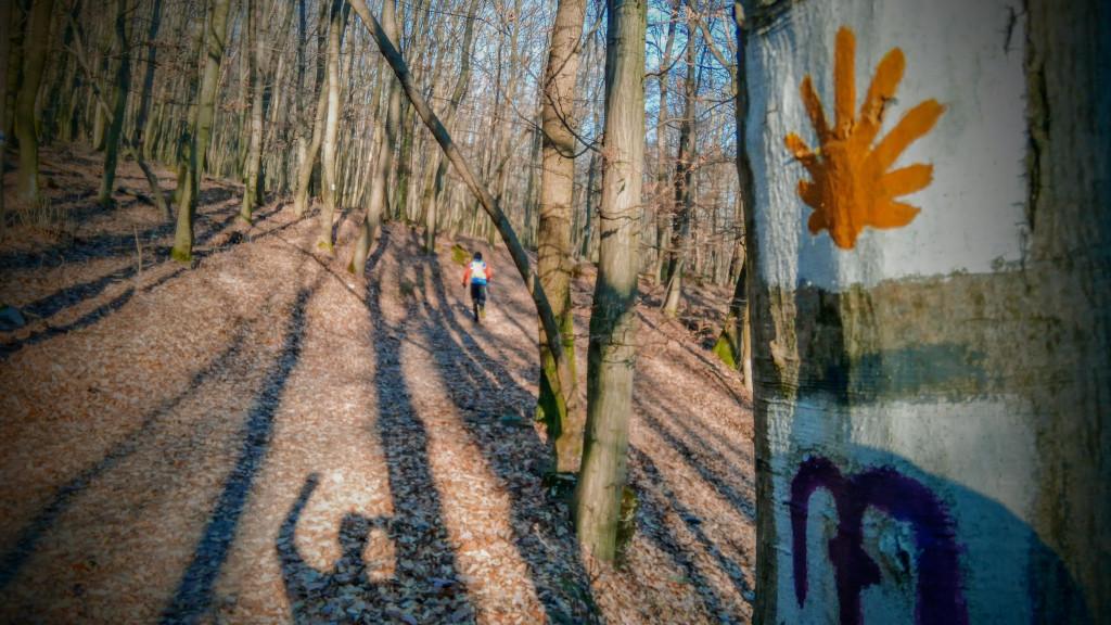 A Turul trail zöme jól futható
