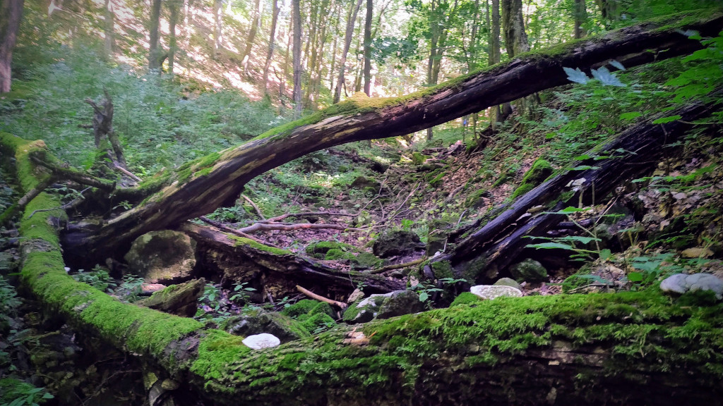 Az Öreg-folyás völgye